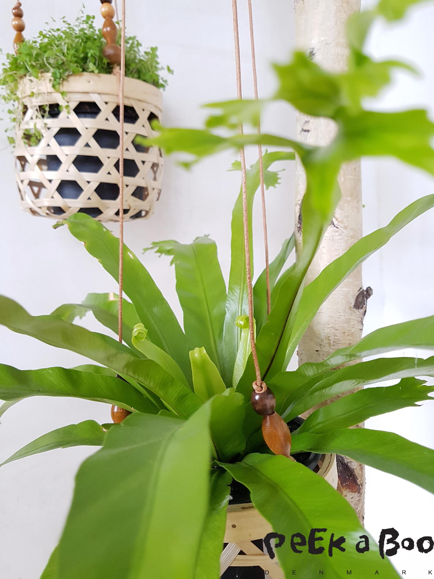 Have a go it is the easiest DIY ever with a great effect...and perfect for your green living room.