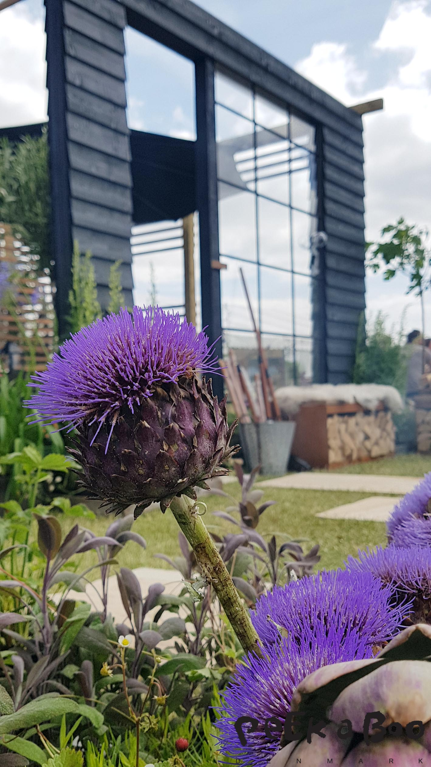 Artichoke in bloom. Now you will mix edible plants and flowers in your prayers, a trend of the CPH Garden show.