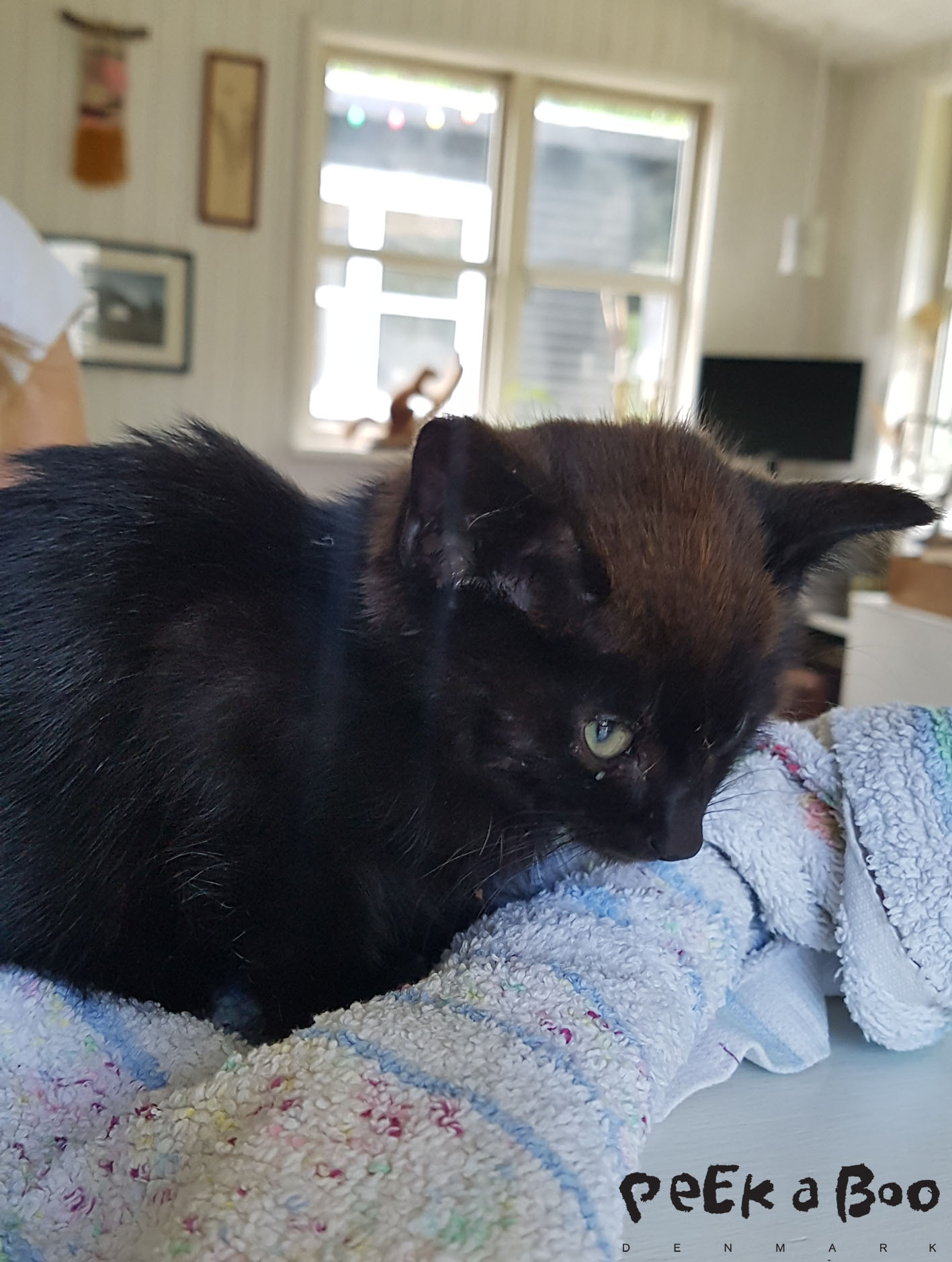 this little kitten was found by the road. very dehydrated and hungry. PLease take care of your pets and treat them well. This is not fair.