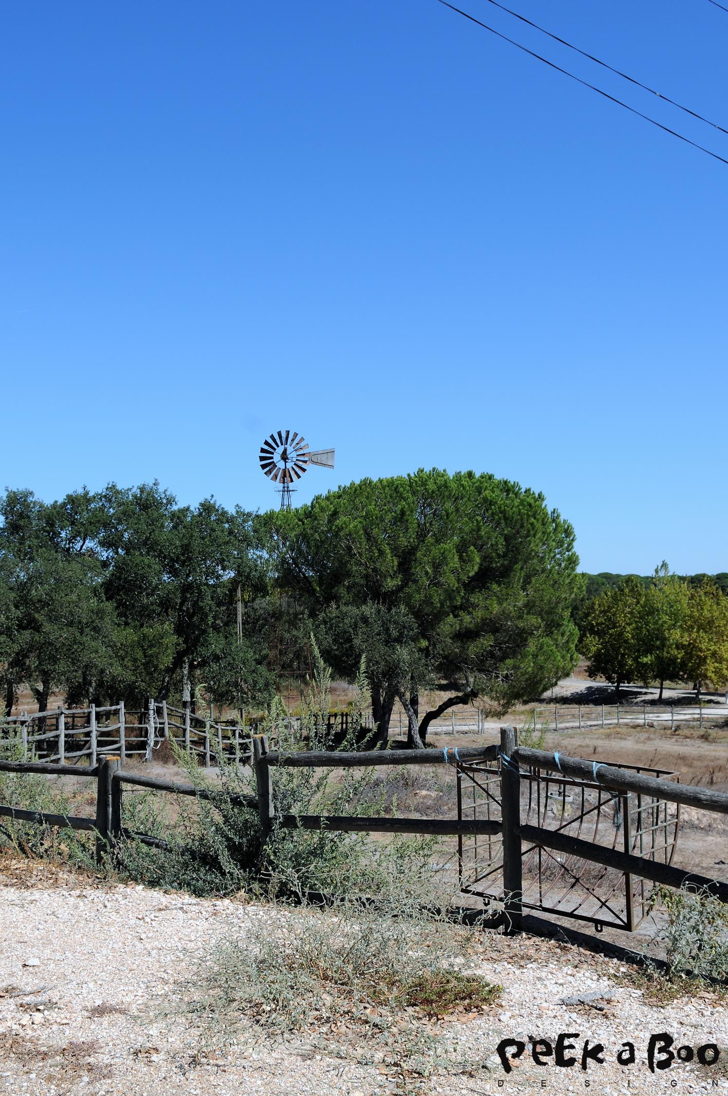 Windmills and corkoak trees surounding the ranch.