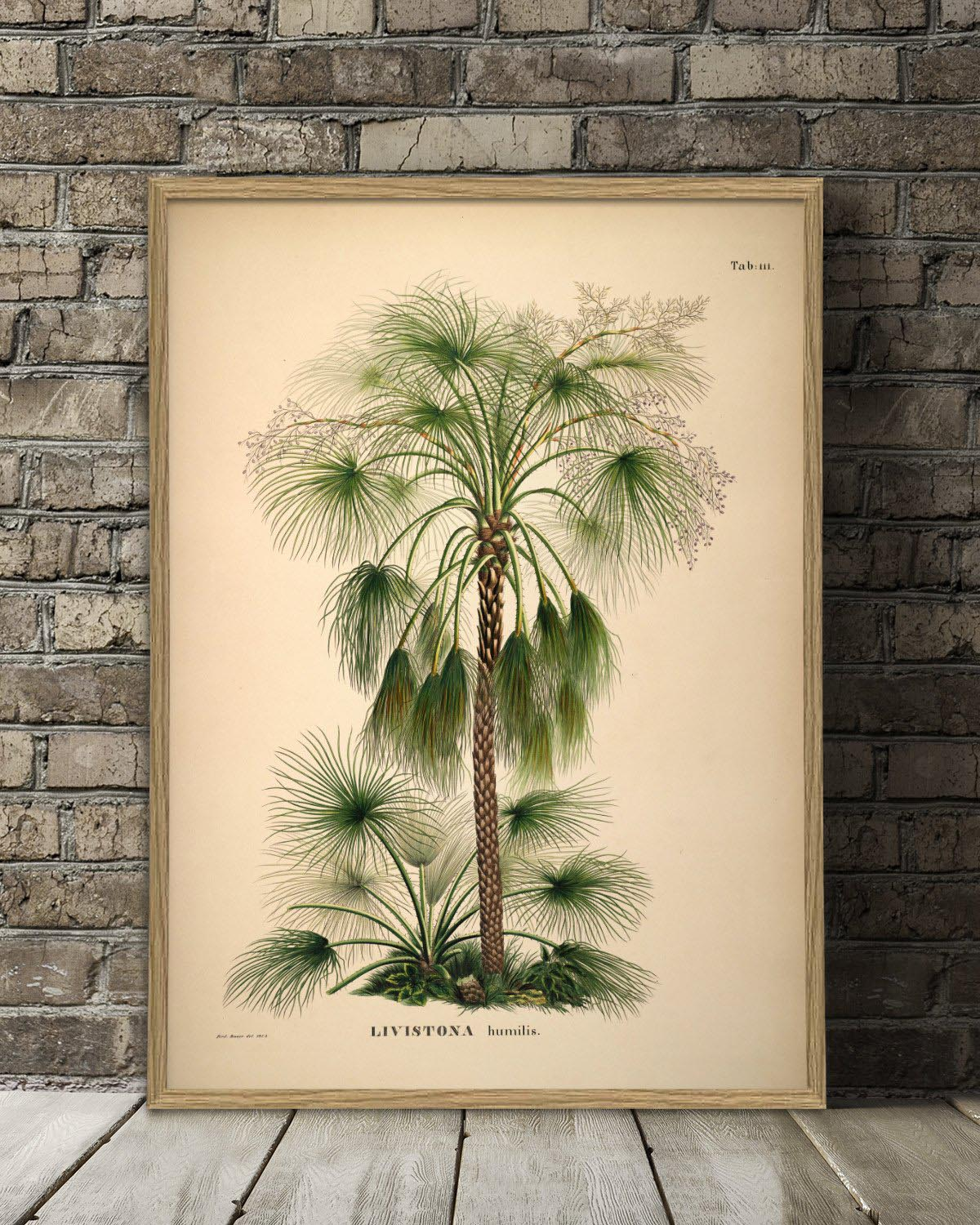 This botanical palm print is possible to get from 30 x 40 cm to at huge poster in size 112 x 158 cm. It is from the poster company the Dybdahl Co.