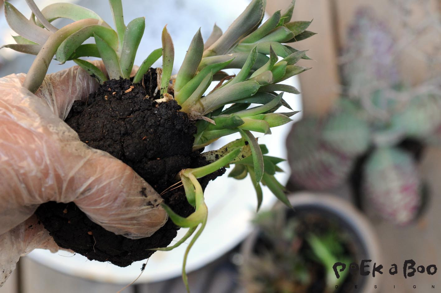 Release the soil from your plants so you only have the roots, and wrap them in the soil balls.
