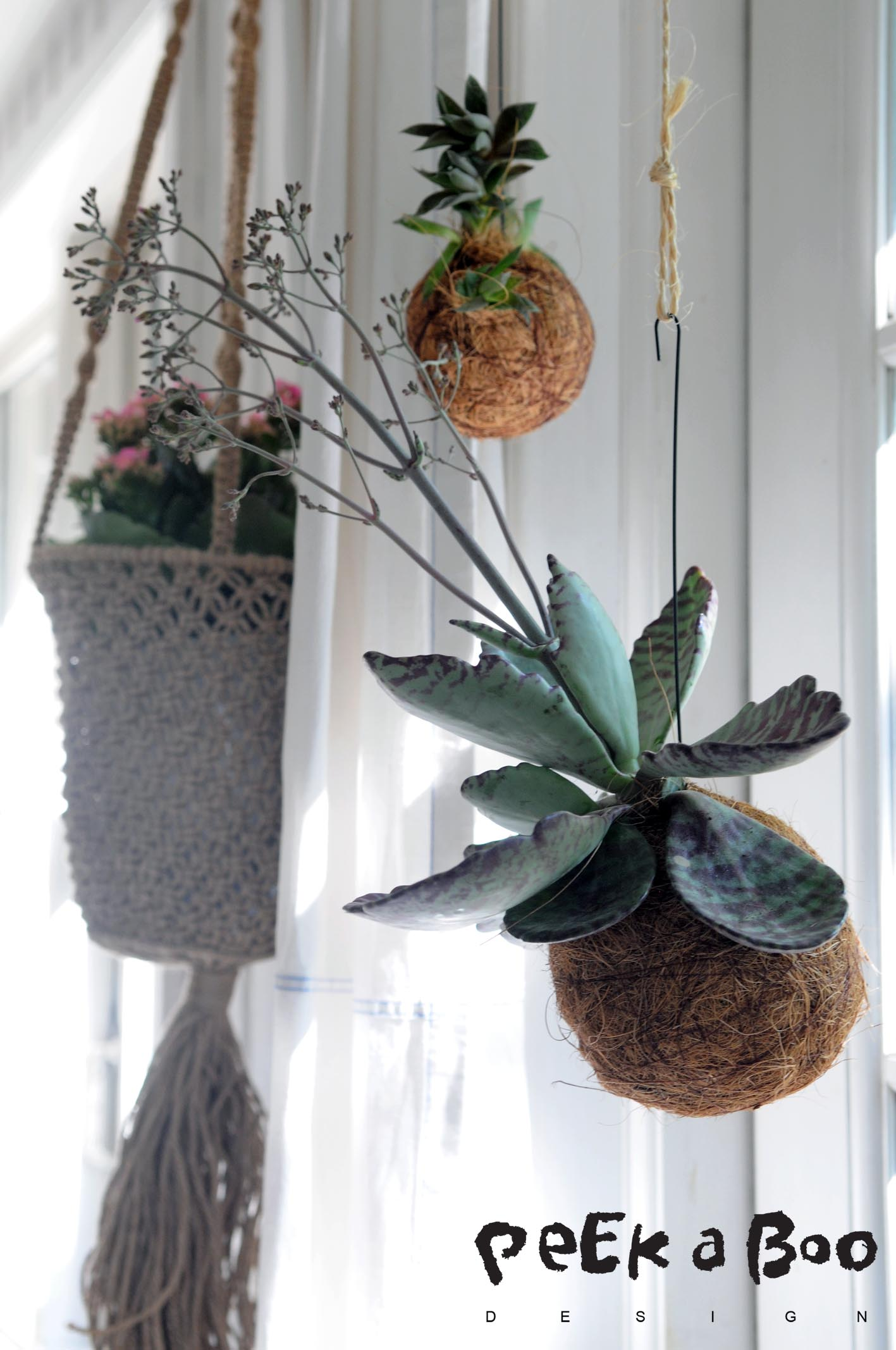 Hanging flower boom in my window...kokedama and macrame in a perfect mix.