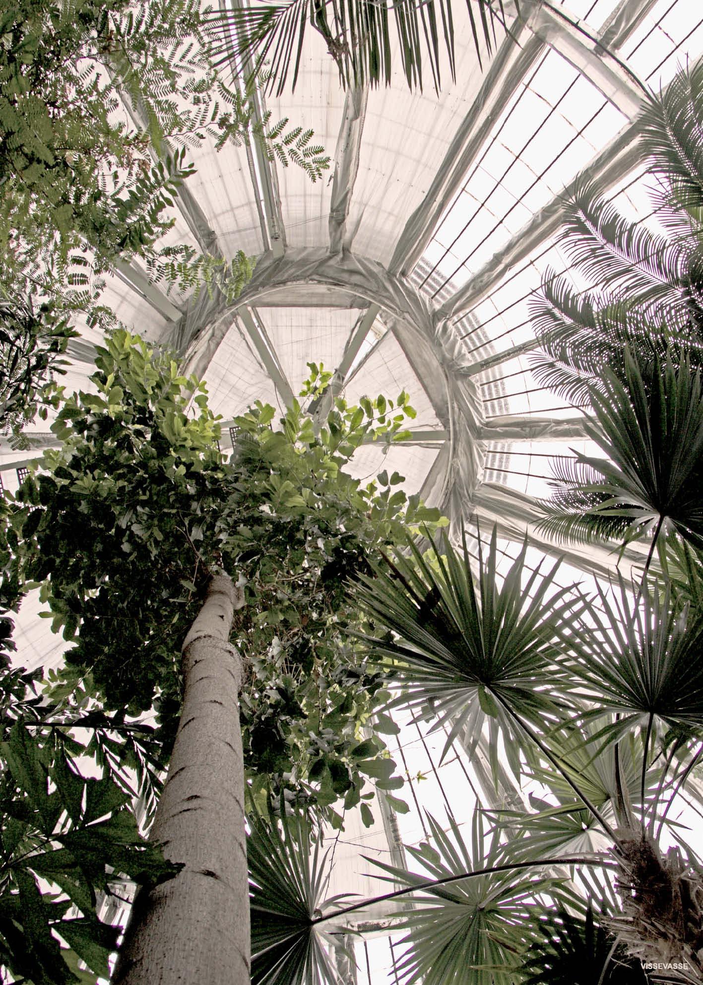 """Botannic photo print from danish poster brand Vissevasse. The photo is taken in the greenhouse """"palmehuset"""" in the Botanic garden of Copenhagen."""
