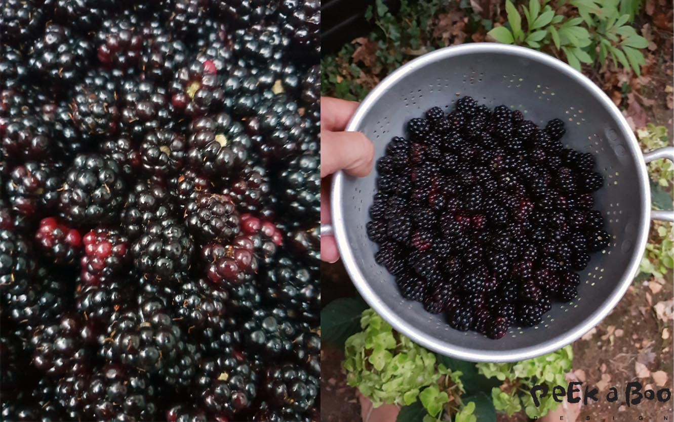 Tomorrows project will be blackberry jam....from these berries just picked today.