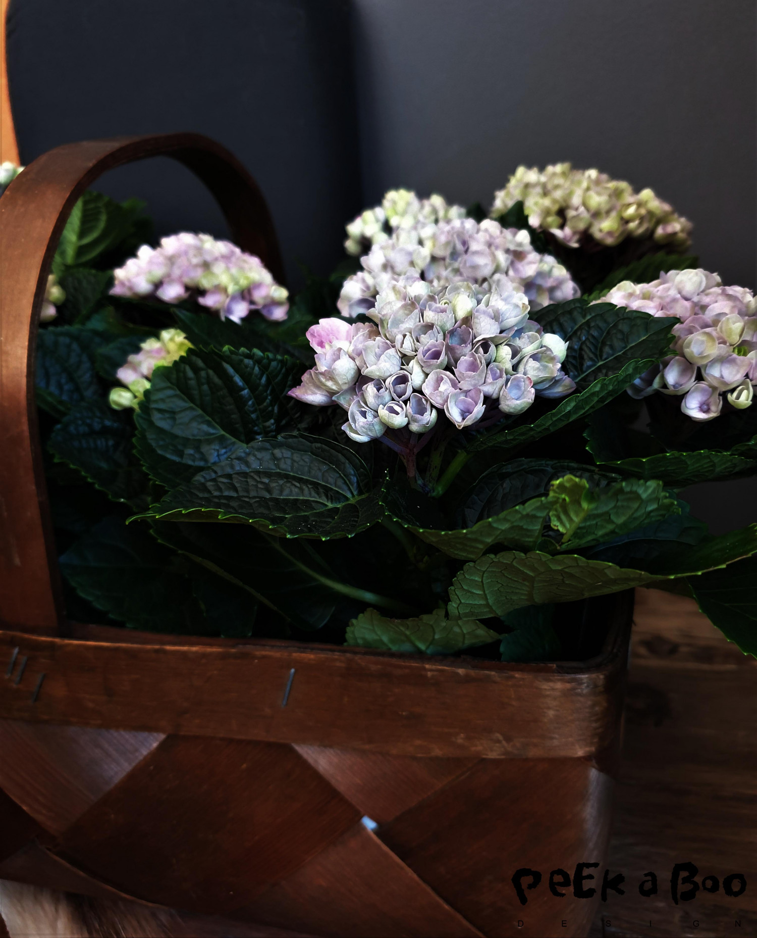 the hortensia in a basket in my livingroom.