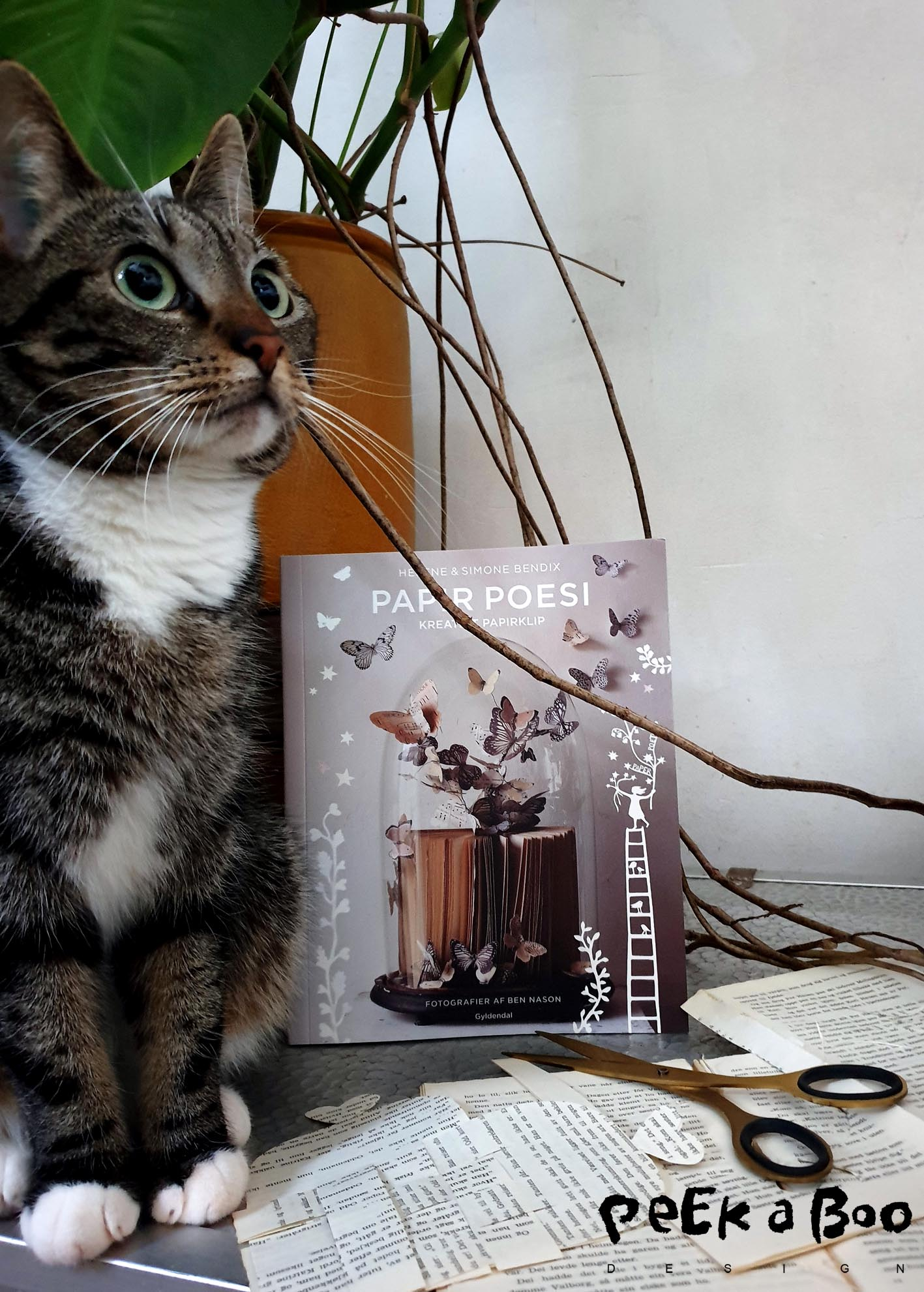the cat that loves modelling....and the new creative books that you should add to your wishlist.