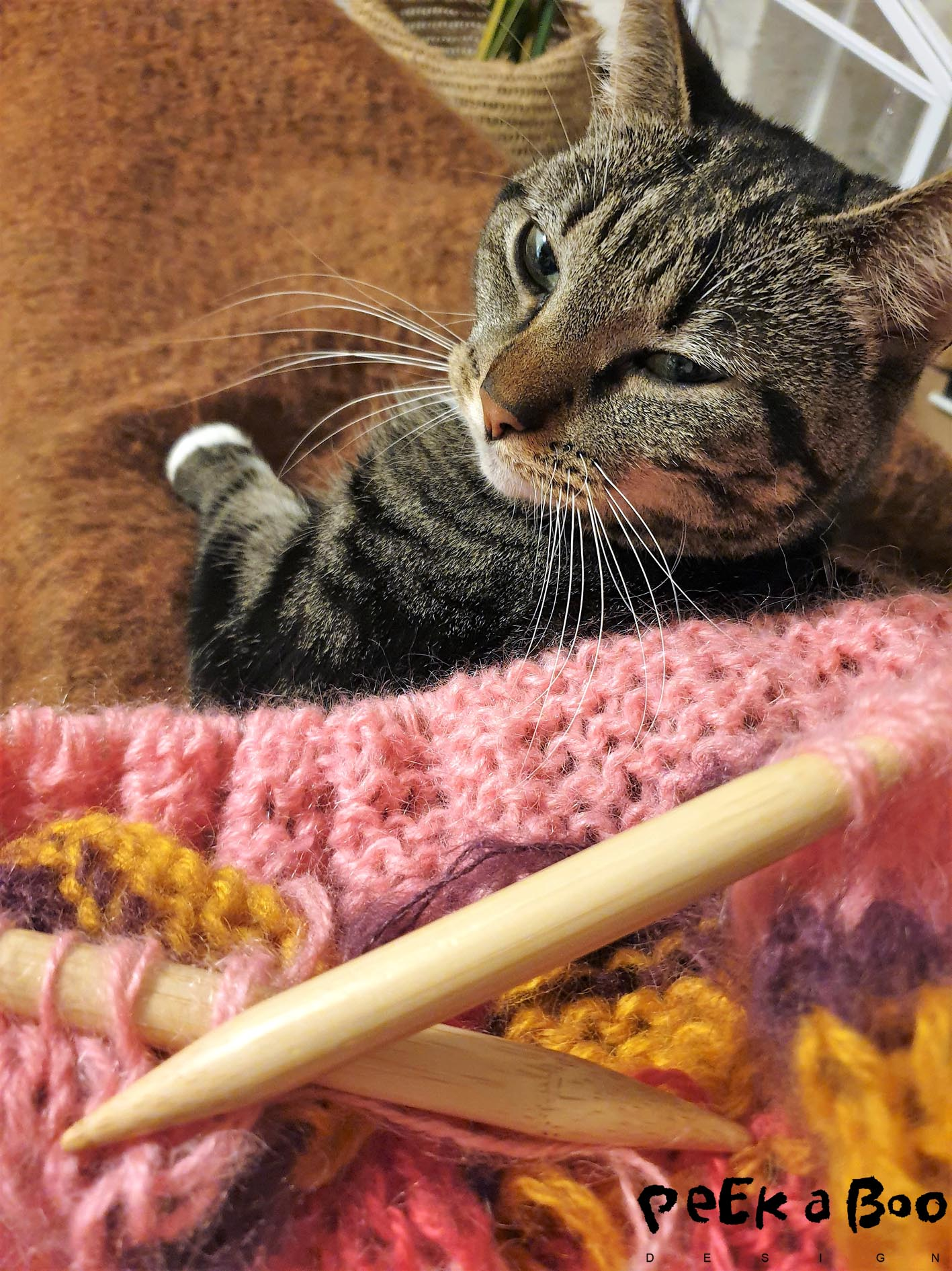 cozy times knitting and cuddling with my cat, Luna.