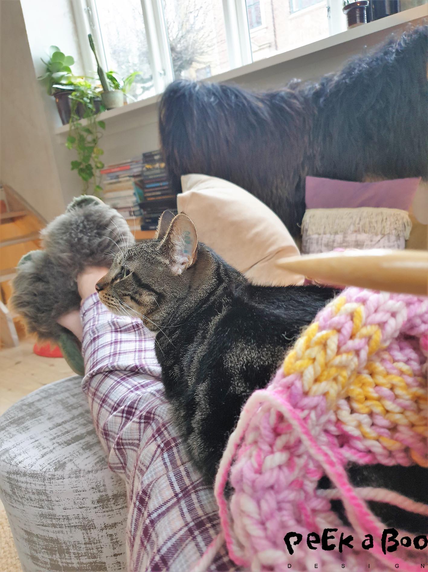 The days after the operation I spend in my py with Luna on my lap and knitting in my hands.