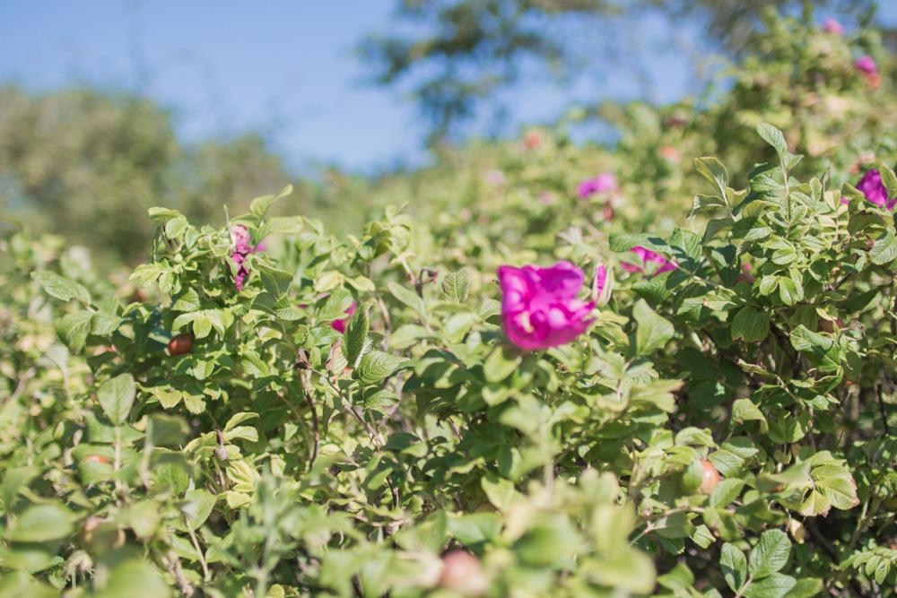 sommerhus-lykke-acie-blog-6-of-13
