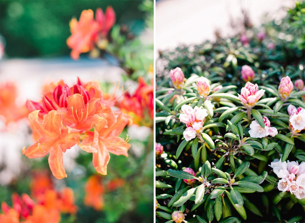 have-acie-blog-blomster-11-of-20