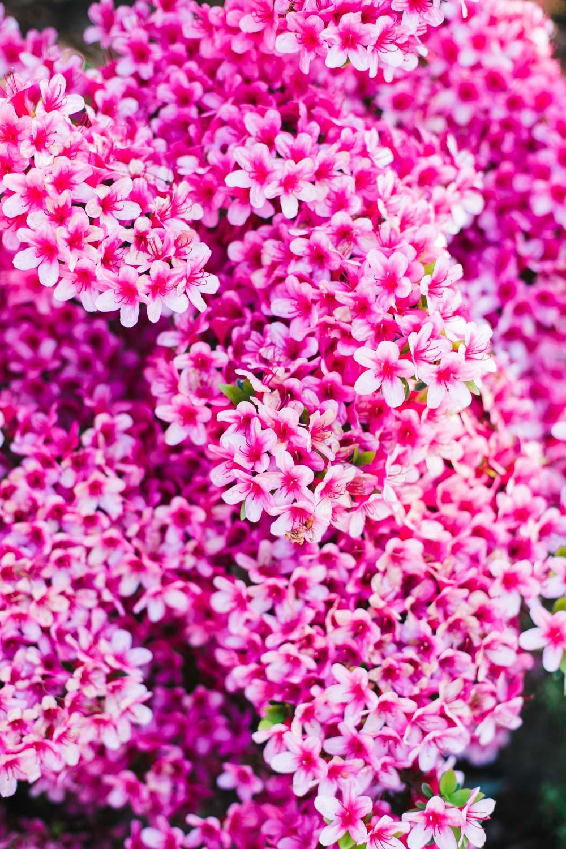 have-acie-blog-blomster-12-of-20