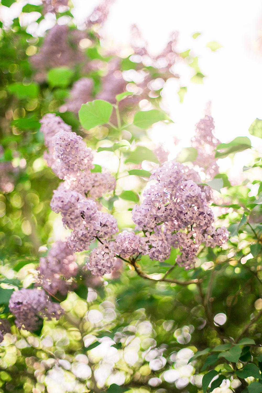 have-acie-blog-blomster-3-of-20