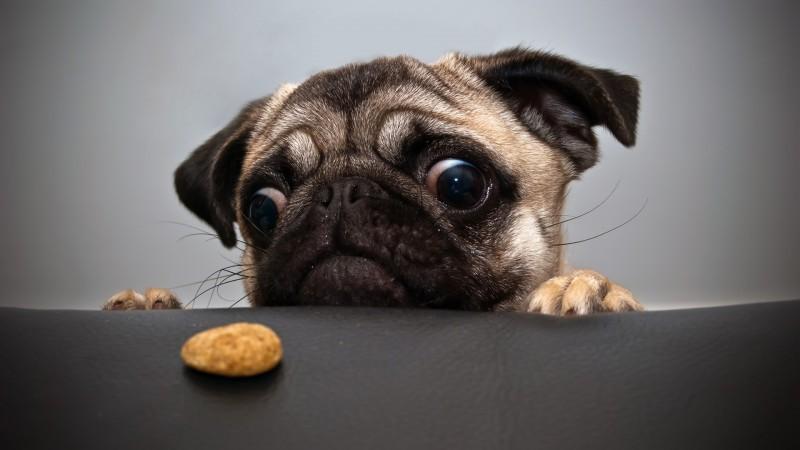 hungry-dog-800x450