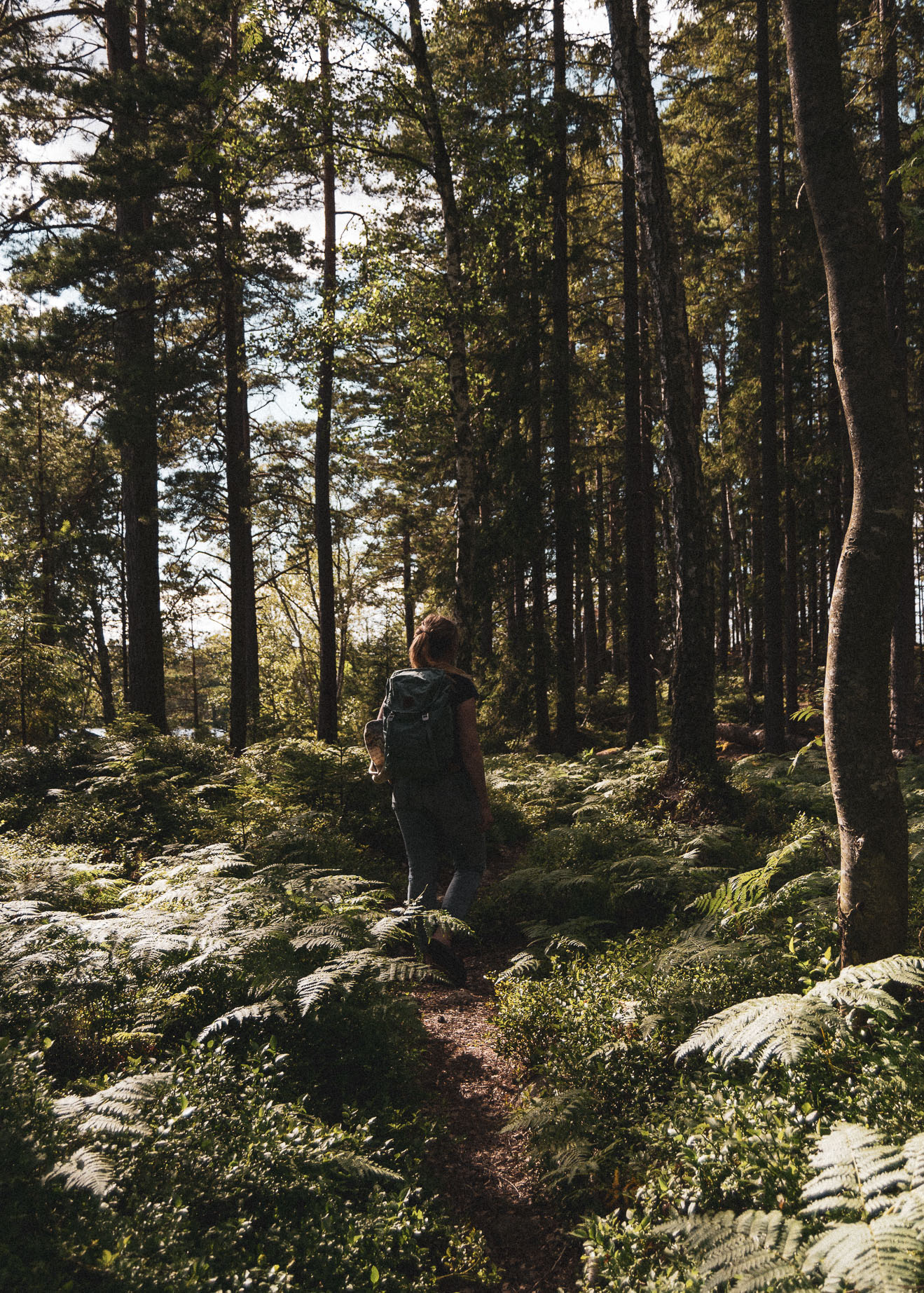 forrest, stories by holst, skov