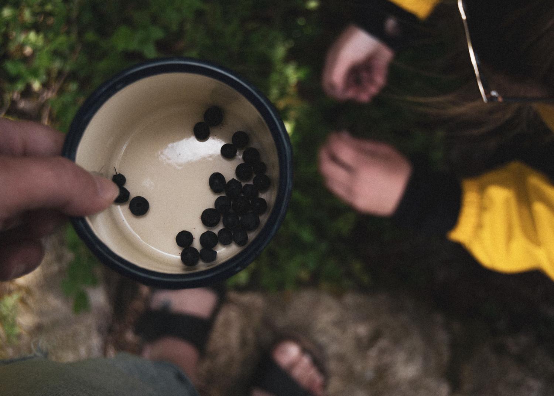 blueberries, blåbær, tin cup, tin kop