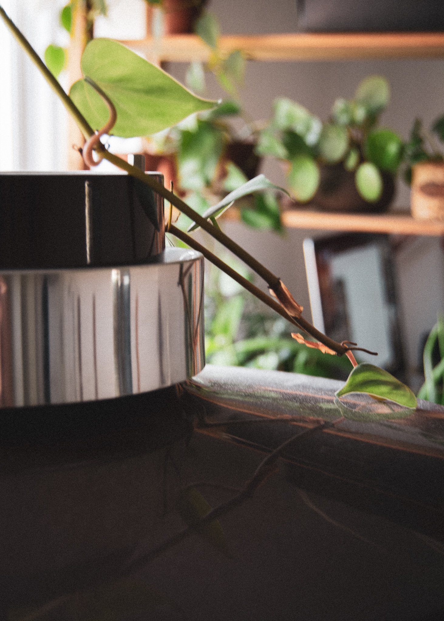 lamp, plant, guldranke, plante, lampe, spisebordslampe, klatreplante
