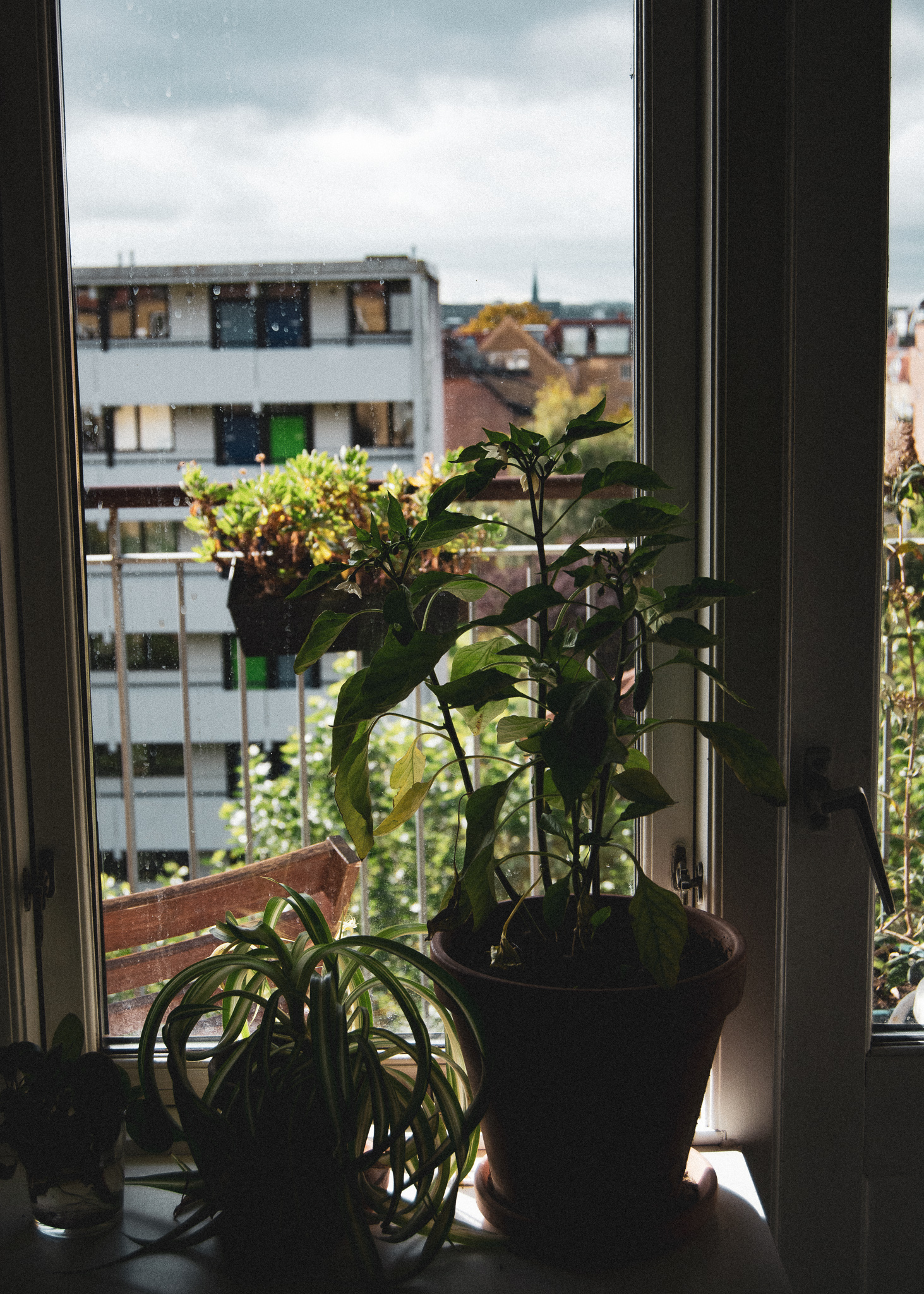 udsigt, by, huse, vindue, lejlighed, plante, bygning, kompleks, altan, view, city, houses, window, apartment, plant, building, balcony
