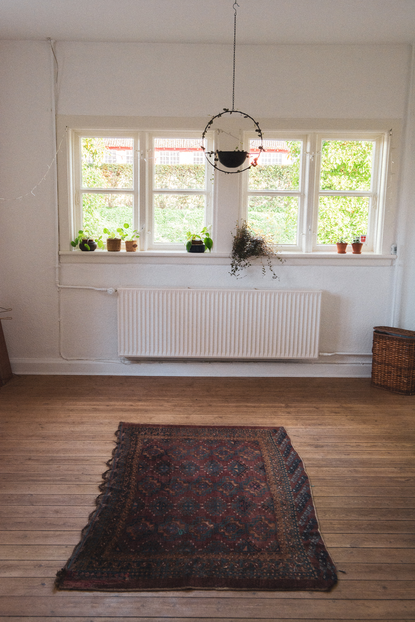 empty livingroom, carpet, tom stue, persisk tæppe, window, vindue, hanging plant, hængeplante, stories by holst
