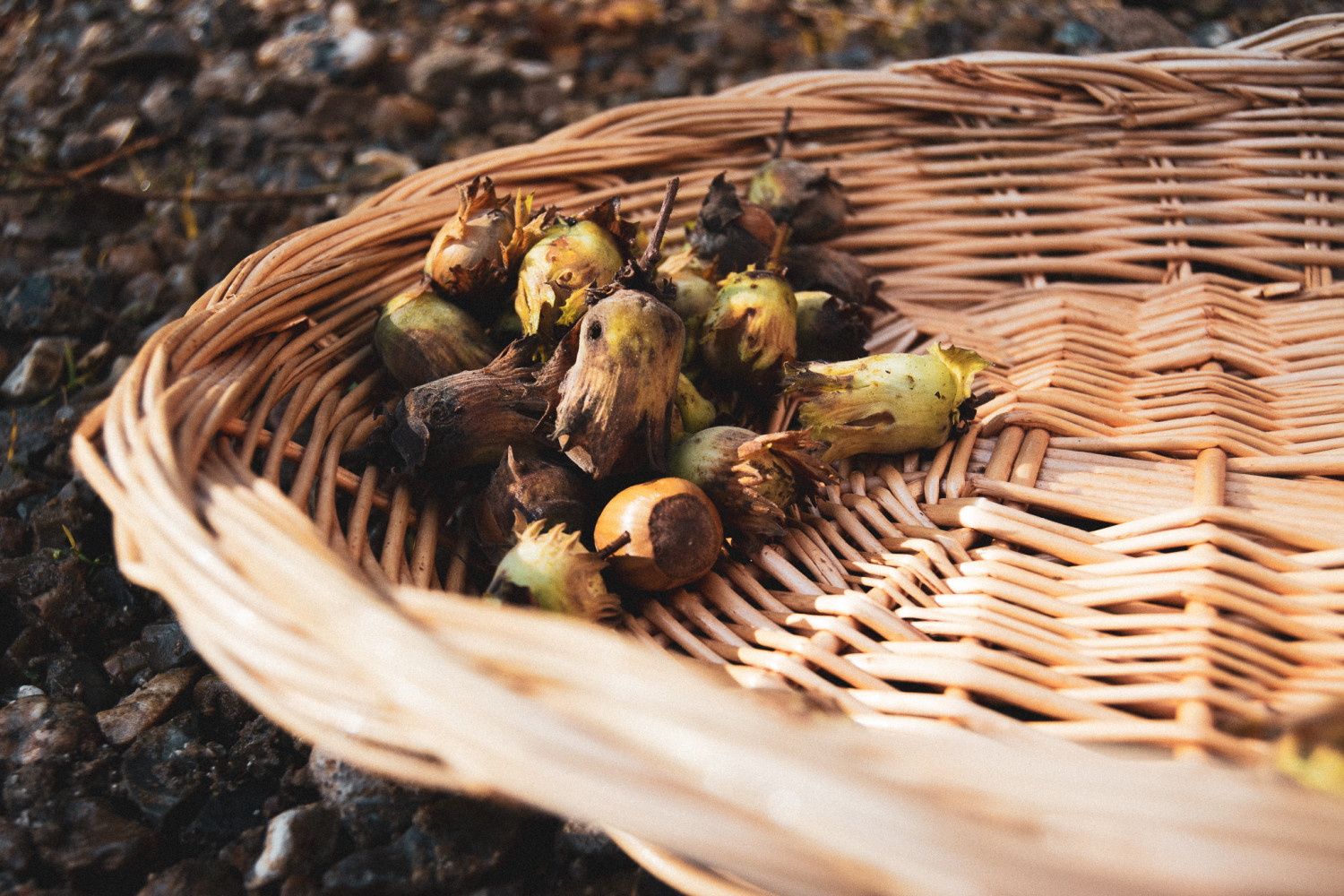 basket, hazelnuts, kurv, hasselnødder, stories by holst