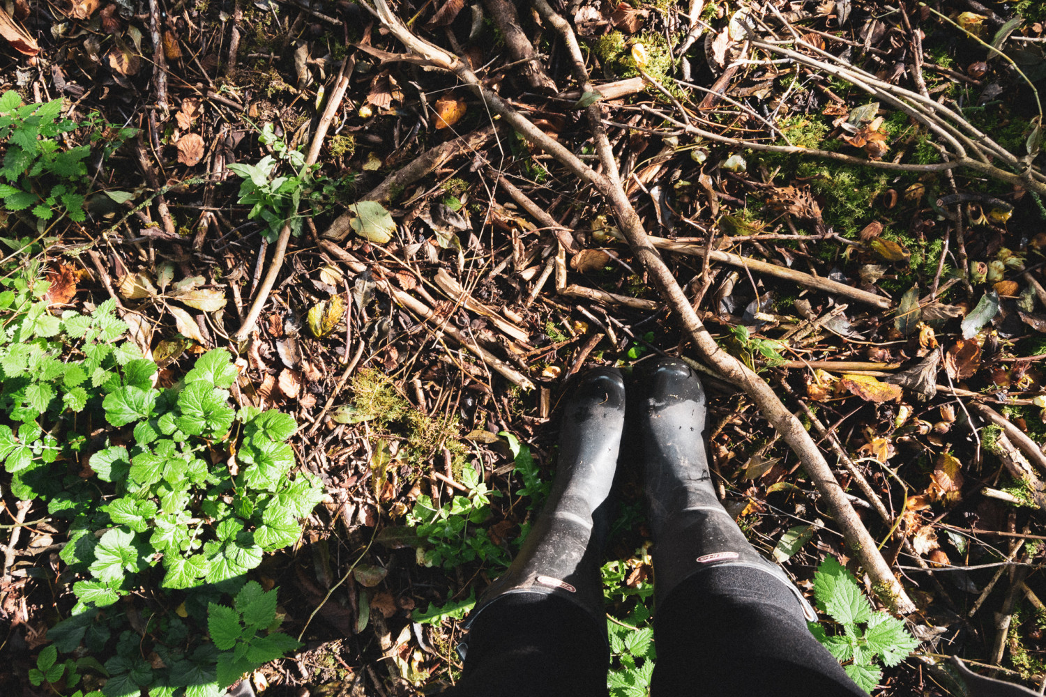 forest floor, rubber boots, skovbund, gummistøvler, stories by holst