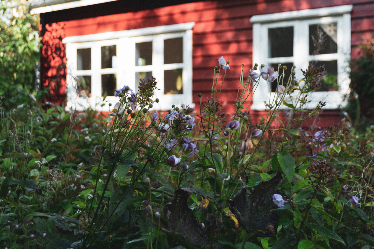 house, wooden house, flowers, garden, hus, træhus, blomster, have, stories by holst