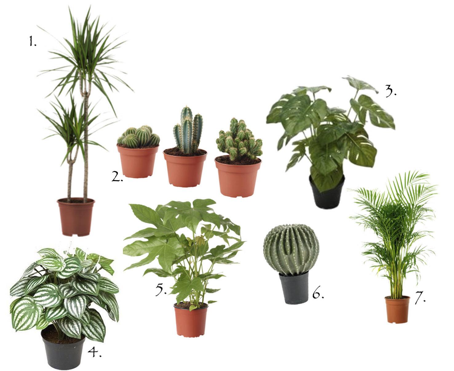 moderigtige-planter