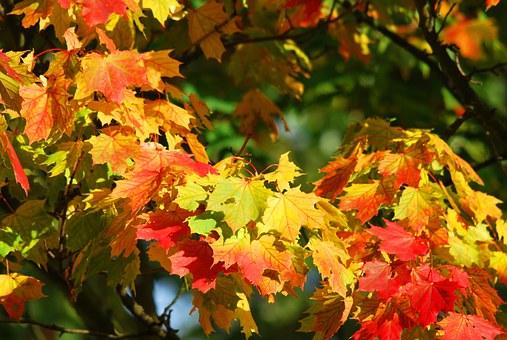autumn-209479__340