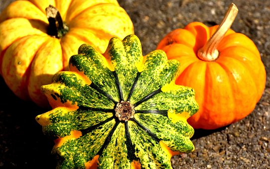 pumpkins-2204643__340