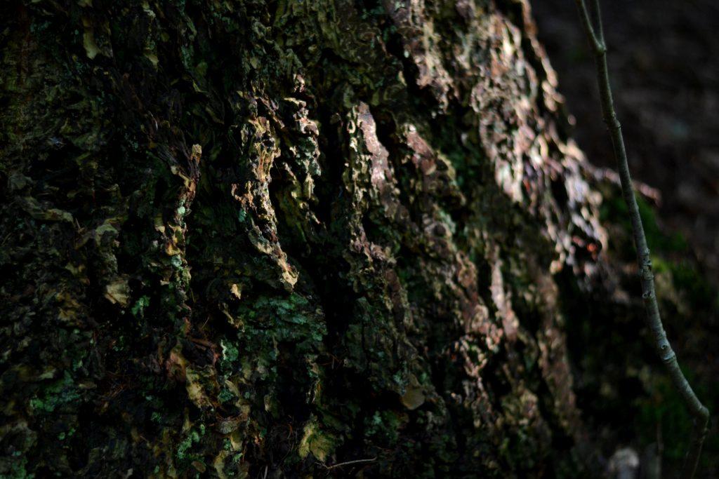 silkeborg natur skov