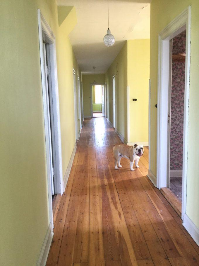 Den lange fordeler gang, som strækker sig fra den ene ende af huset til den anden. Pablo har lige sneget sig med på billedet ;-)