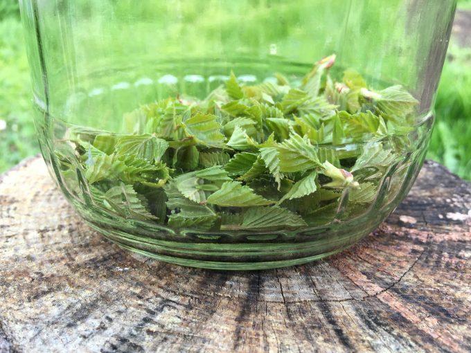 kryddersnaps-med-spaede-birkeblade1