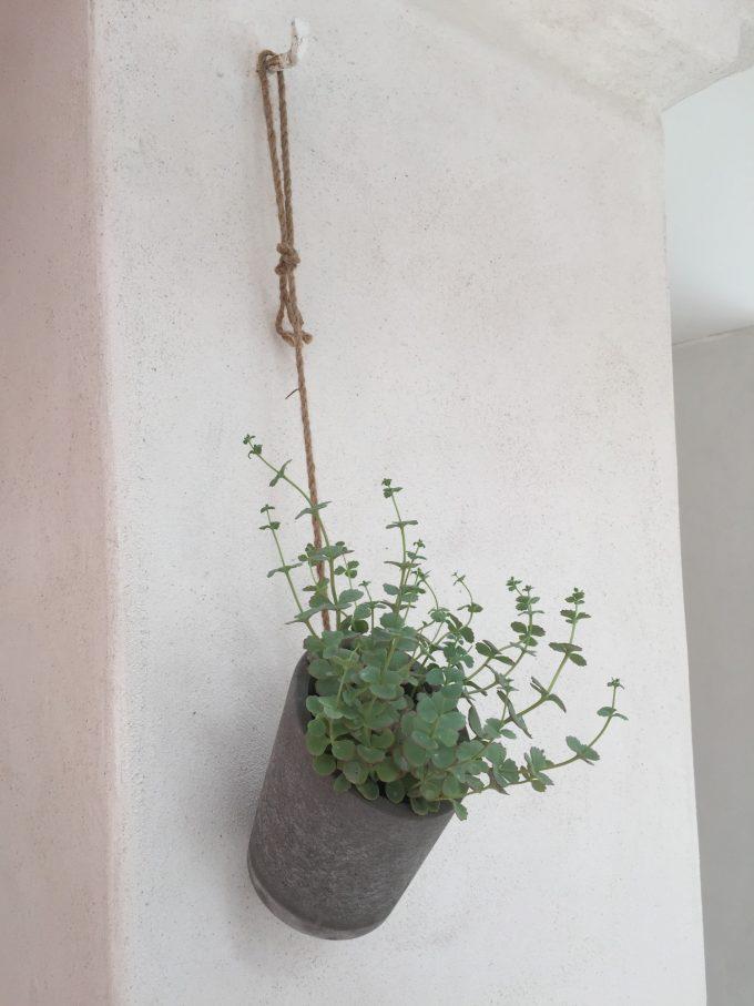 haenge-plante-paa-vaeggen