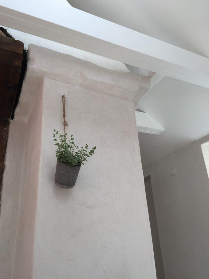 plante-paa-vaeggen-paa-det-gamle-skorsten