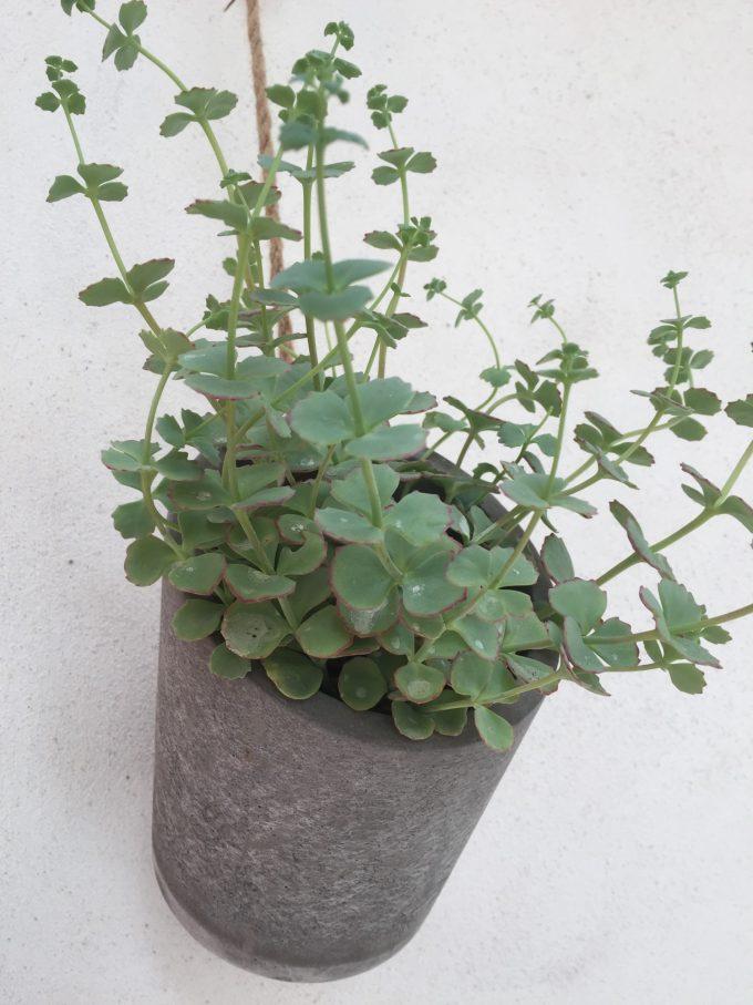 vaeg-plante-i-betonpotte