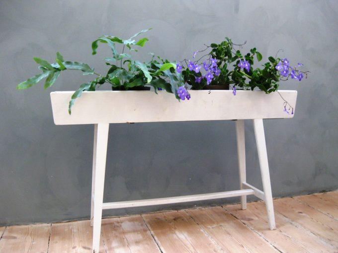 plante-kasse-interior