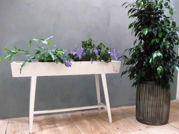 streptocarpus-saxorum-og-stuebirk-fint-interioer