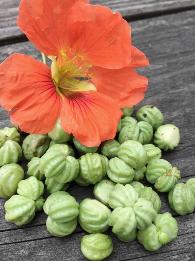 tallerkensmaekkerfroe-og-blomst