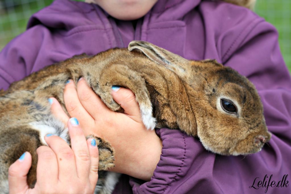 rabbitcloseup