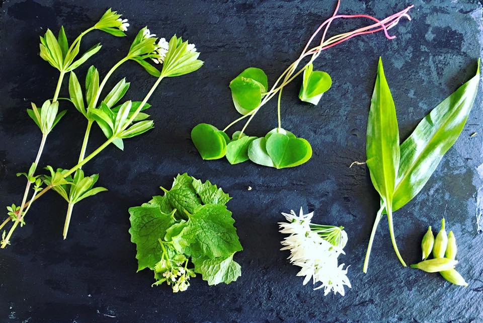 sankede urter
