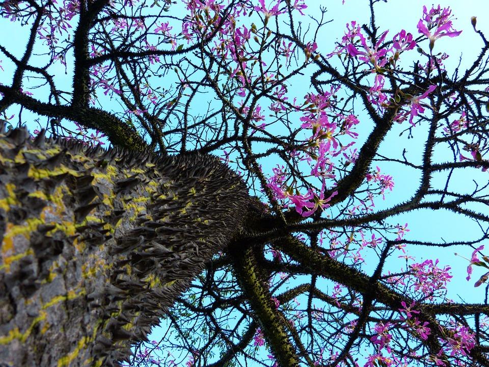 kapok-tree-323530_960_720