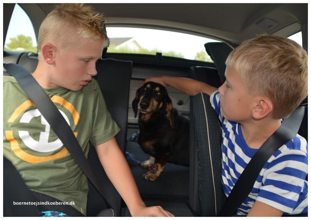 At sige farvel til sin hund