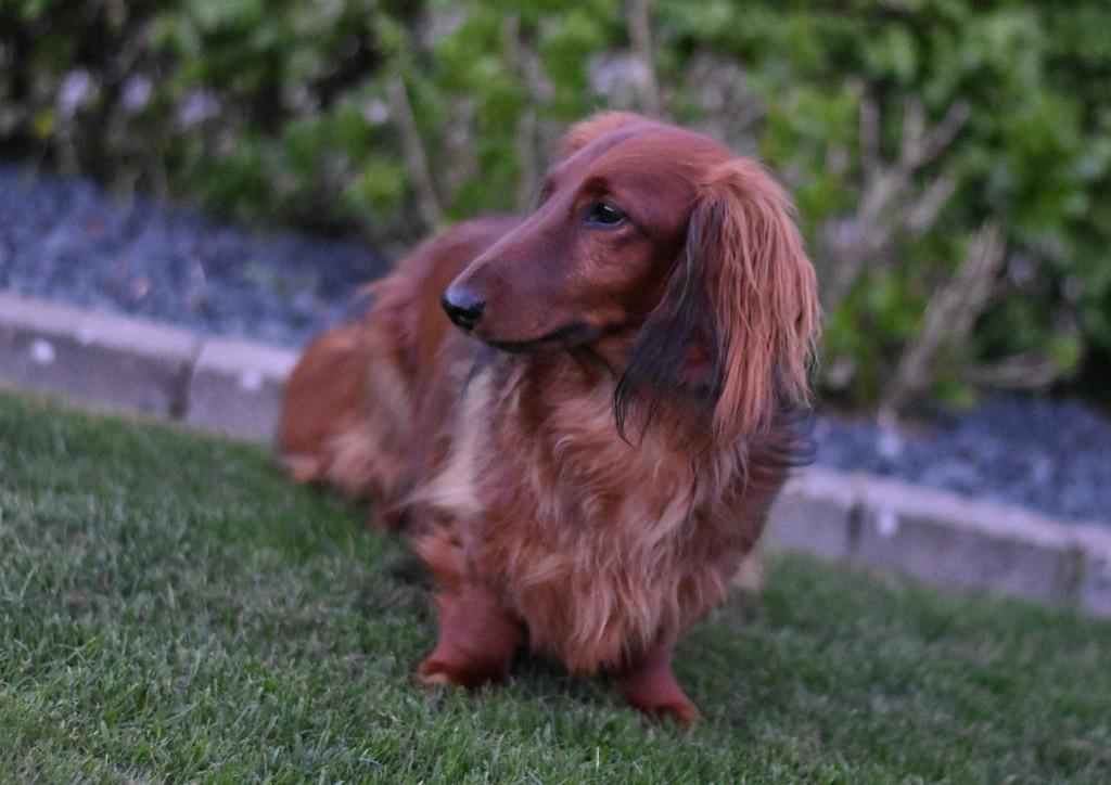Erfaringer med at adoptere en hund