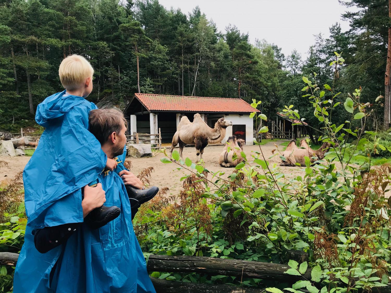 dyreparken-annemette-voss-9