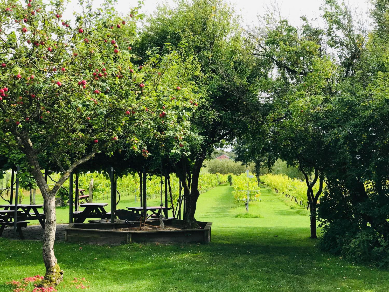 visit-nordjylland-annemette-voss-glenholm-vingard-2