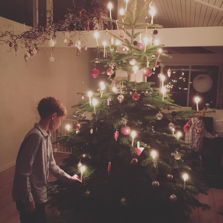 William er også betaget af det smukke træ
