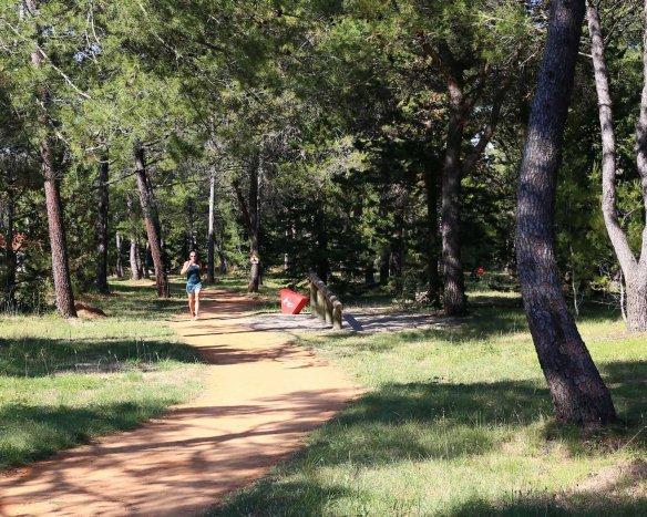 Løb natur skov