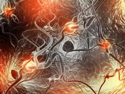 Hjerne fitness Synapser