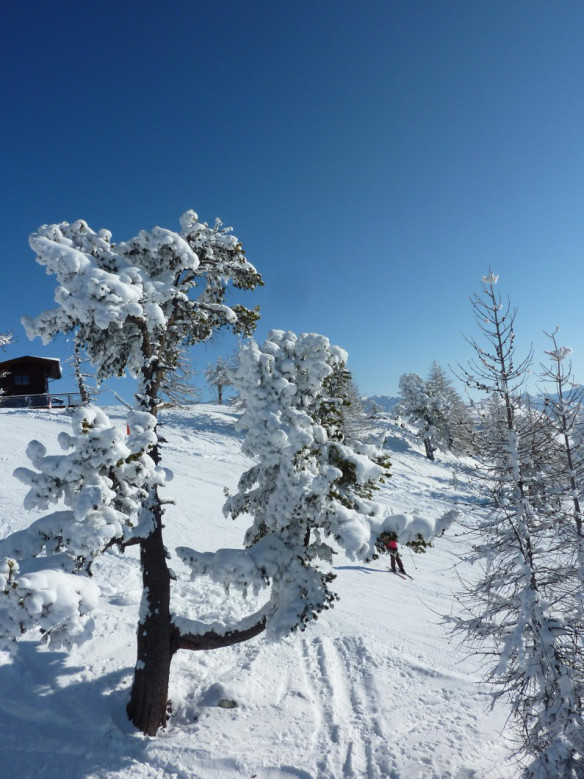 Sestriere_Trees_Snow