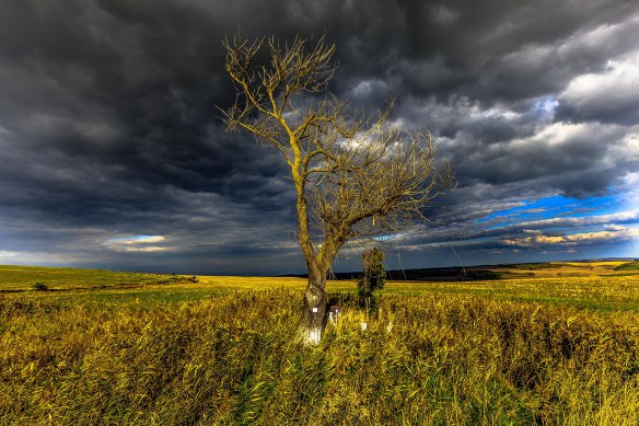 Tree_and_fields_Cluj_photo_Henrik_Elstrup